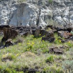 Springtime Wildflowers in the Badlands of Dinosaur Provincial Park
