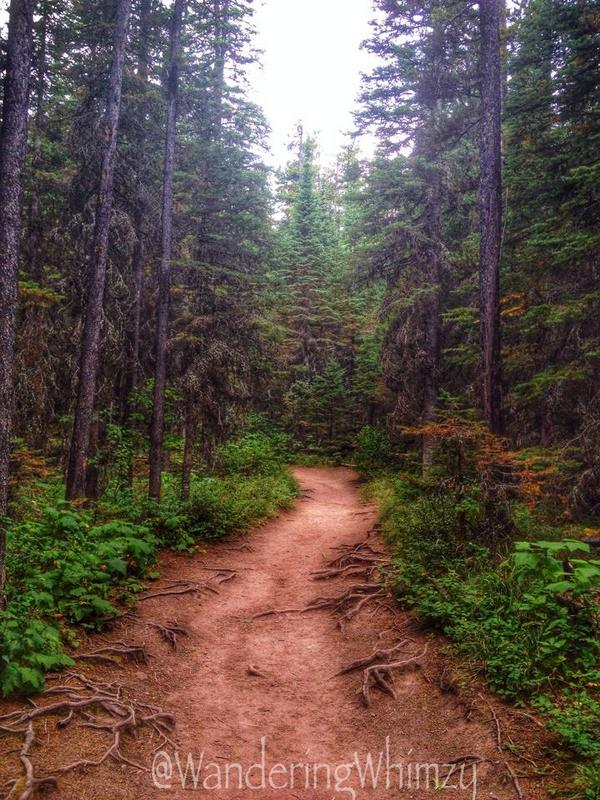 The trail that leads to Blakiston Falls is very nice for hikers of all ages