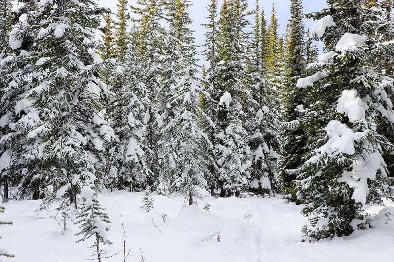 winter-hike-to-peyto-lake-4